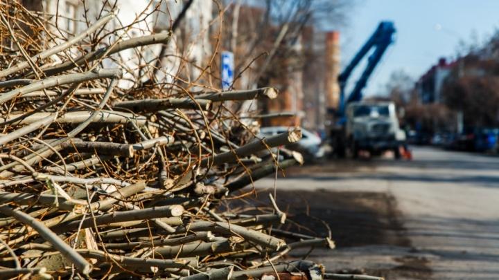 При благоустройстве дворов в центре Тюмени незаконно вырубили деревьев на 5,8 миллиона
