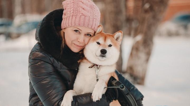 Собака-улыбака: тюменка рассказала про содержание любимого пса породы сиба-ину