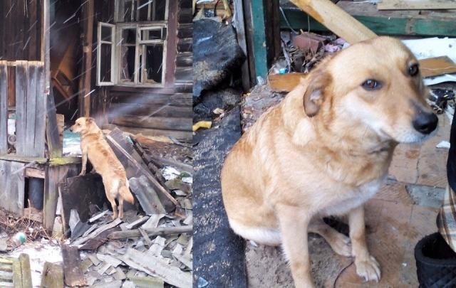 Ярославский Хатико ждет своих хозяев на руинах разрушенного дома за Волгой
