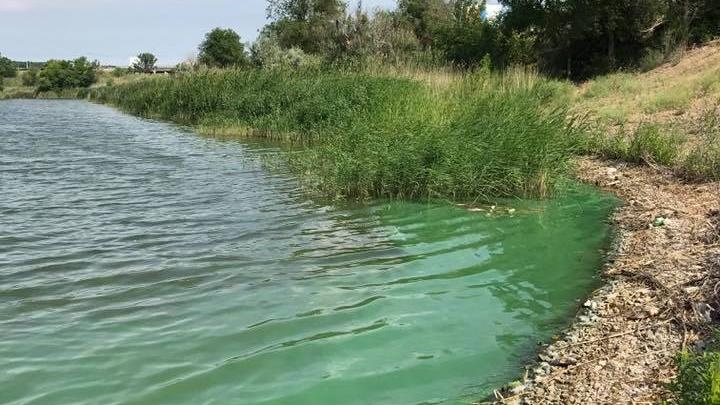 В Волгограде ищут источник отравления рыбы в Ангарском пруду