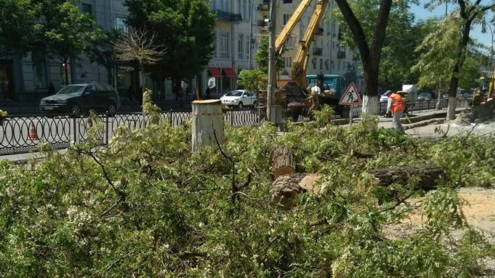 38 кленов и 16 лип: на Садовой вместо спиленных деревьев высадят новые