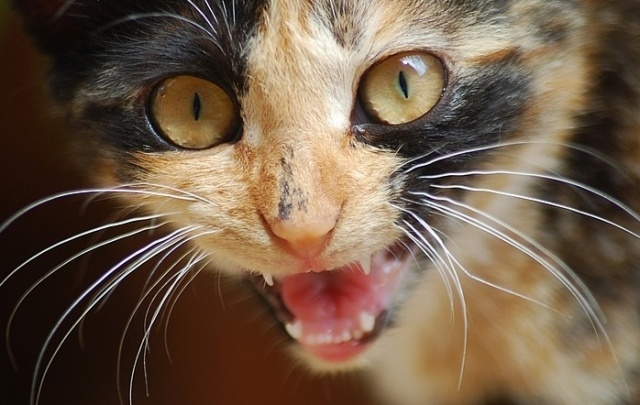 Бешеный кот покусал семилетнего ребенка в Ростовской области