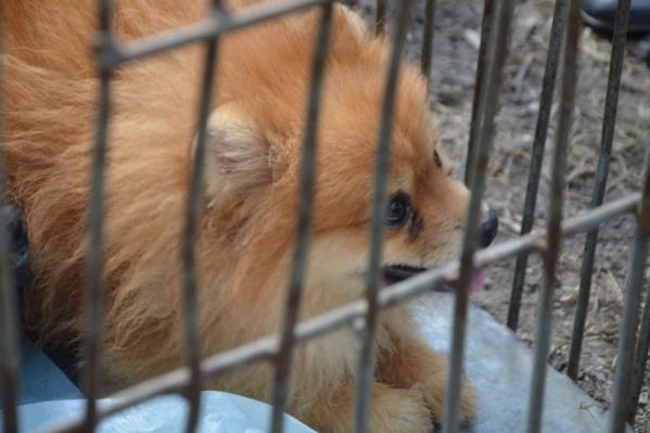 Животные были в большом стрессе, когда их вывели из квартиры на улицу. Сейчас пушистики уже успокоились