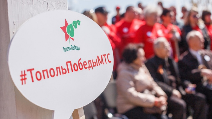 Волгоградский тополь Победы взойдет в 17 городах России
