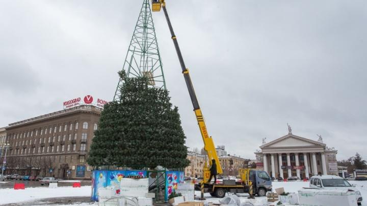 В Волгограде через неделю соберут главную новогоднюю ёлку