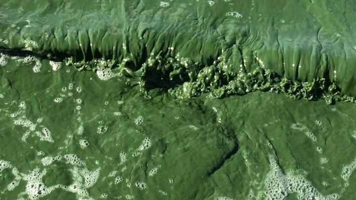 «Разве это нормально»: челябинцев удивил ярко-зелёный цвет воды в Шершнях
