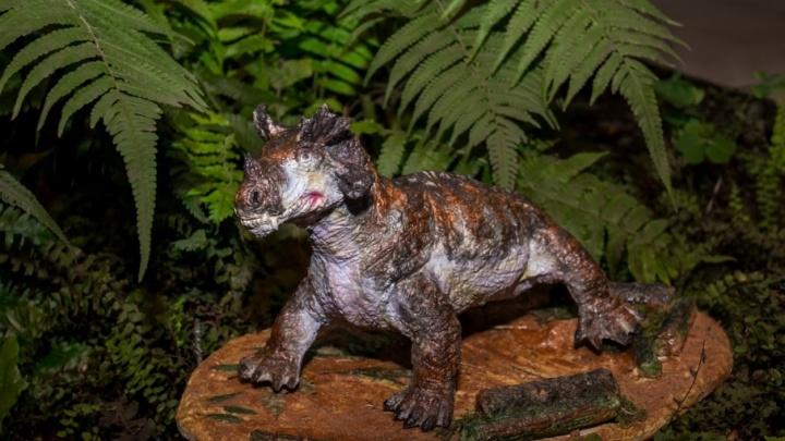 Назад на 250 млн лет: смотрим на доисторических ящеров, которые появятся в Ботсаду ПГНИУ