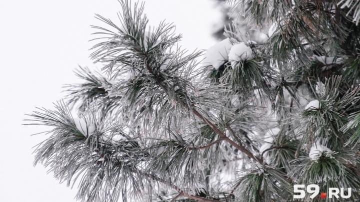 Осторожнее на дорогах: МЧС предупредило о сильной изморози в Прикамье