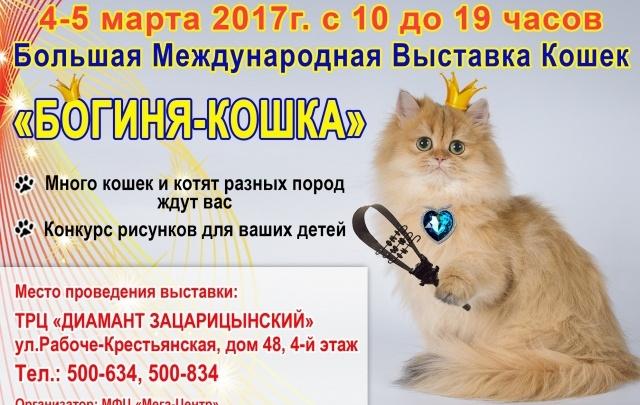 Выставка «Богиня-кошка» покажет волгоградцам более 130 лучших питомцев