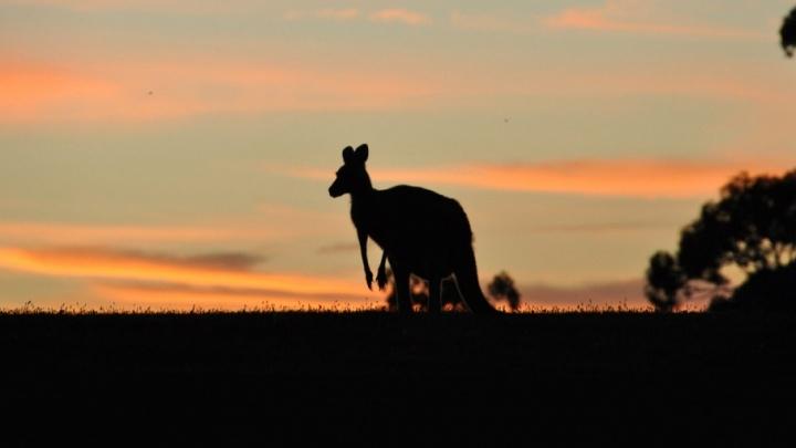 Живут вверх ногами и виноваты в смерти Кука: все мифы об Австралии
