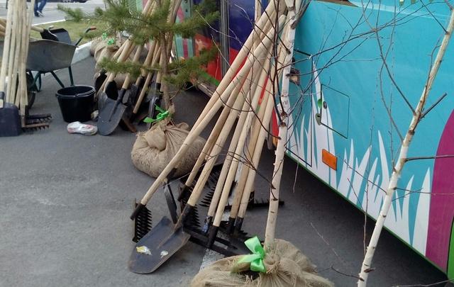 Тюменцам бесплатно раздадут саженцы пихты для украшения дворов и парков