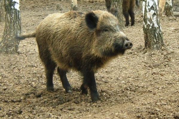 Ярославские депутаты планируют ужесточить наказания для браконьеров