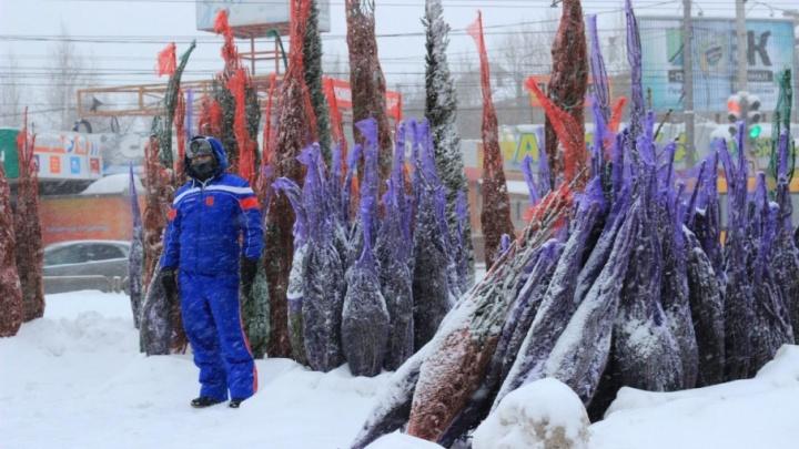 В Перми поймали бизнесмена, который незаконно продавал новогодние ели