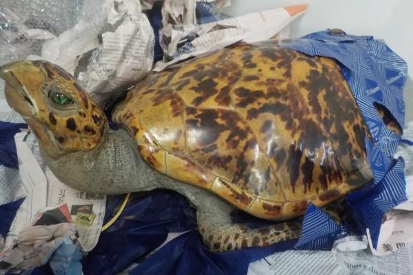 Черепаха была завернута в газеты
