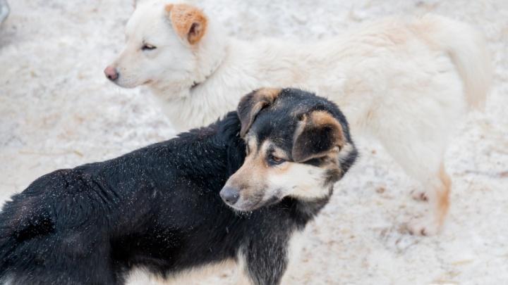 Самарцы просят власти обустроить в городе больше площадок для выгула собак