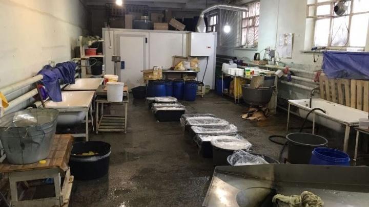 Салаты с этикеткой «Сделано в Тюмени» готовили в грязном гараже: повара-мигранты жили в этом же помещении