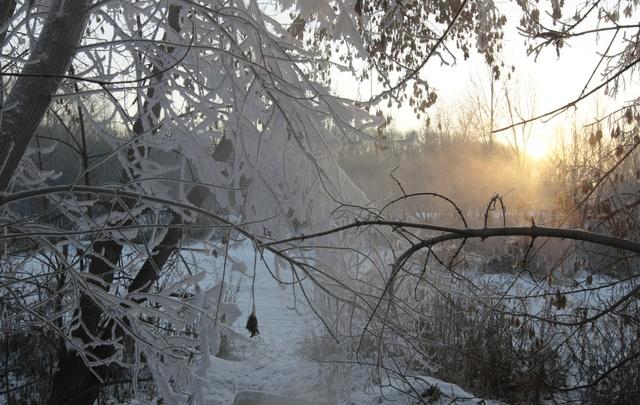 В лесах под Североонежском пропала пожилая женщина