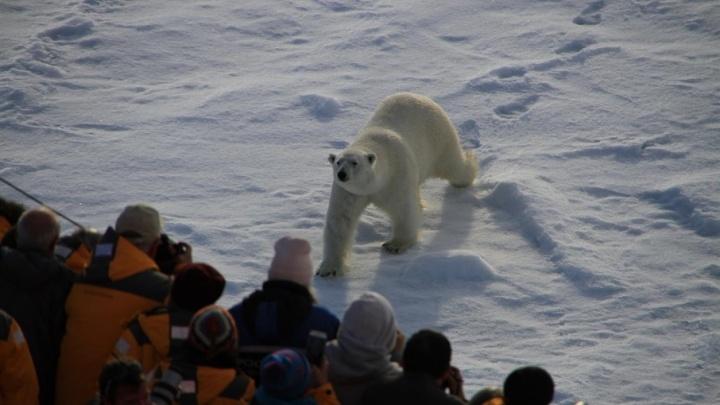 Русскую Арктику в 2017 году для себя открыли туристы из 36 стран мира