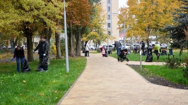 Клены, дубы, акации, катальпы: в Аксайском районе посадили больше двух тысяч деревьев