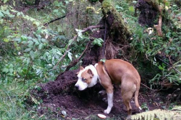 Не известно, сколько времени собака провела так под деревом