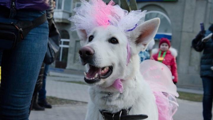 В Волгограде модные собаки устроят карнавал