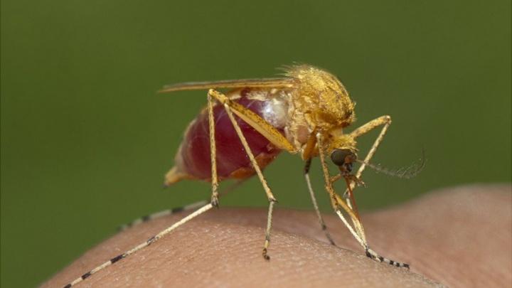 Роспотребнадзор: в центре Волгограда истребили всех клещей и почти всех комаров