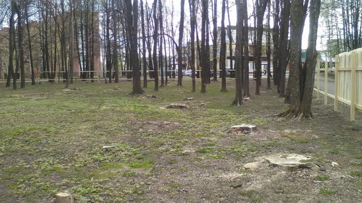В Ярославле вырубили зелёный парк: что построят на этом месте