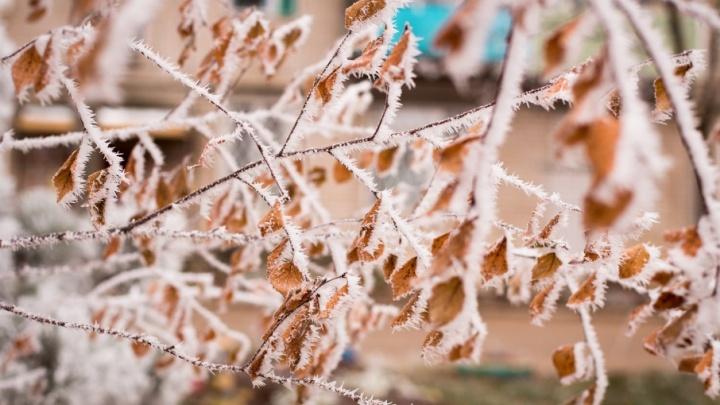 Синоптики предупредили ярославцев о первых заморозках
