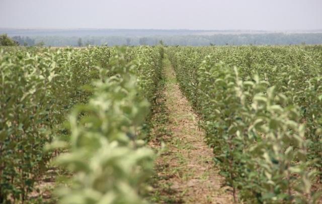 «Сады Придонья» развивают питомниководство