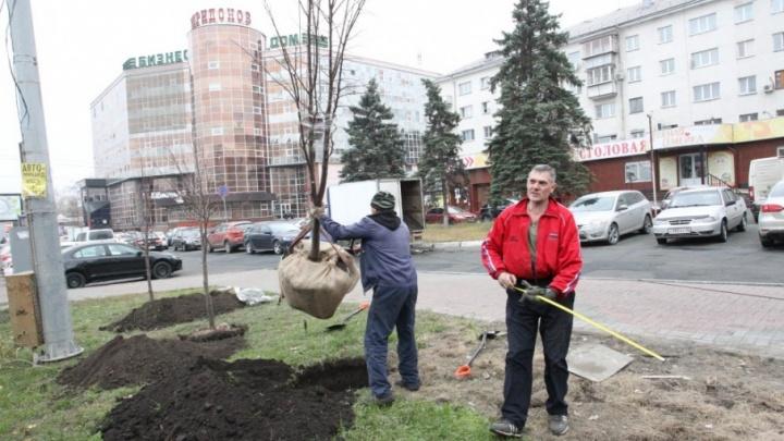 Дорогу Путина устелют липами: в центре Челябинска начали высадку новых деревьев