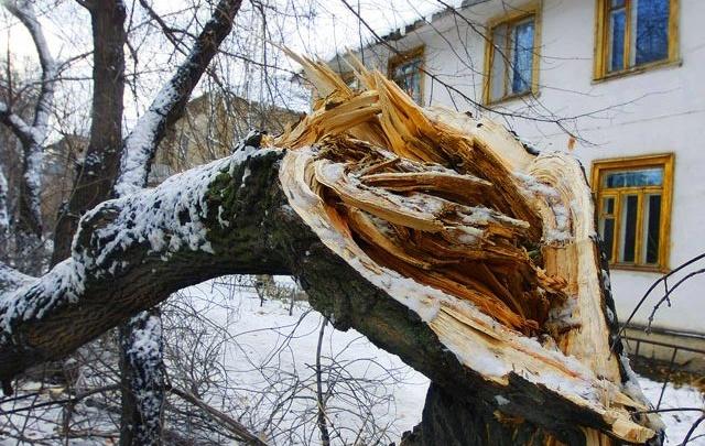 В МЧС предупредили челябинцев о катаклизмах из-за сильного ветра