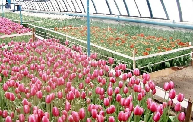 К 8 Марта в Самару доставили безопасные цветы из Армении, Эквадора, Израиля и Голландии