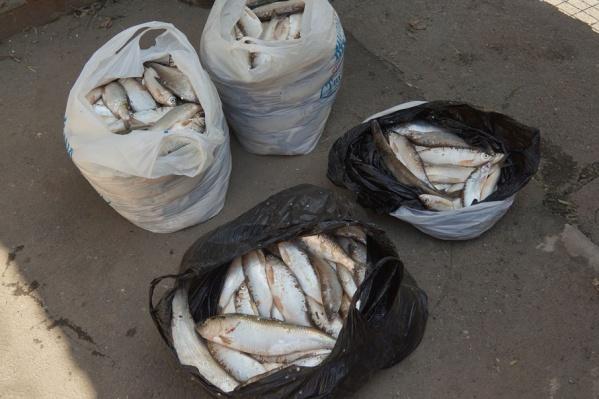 Браконьеры ловили рыбу для продажи почти в промышленных масштабах