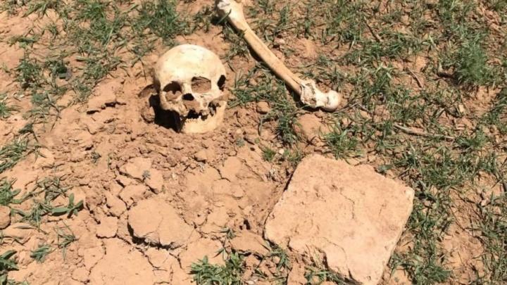 Под Волгоградом нашли останки жителя столицы Золотой Орды