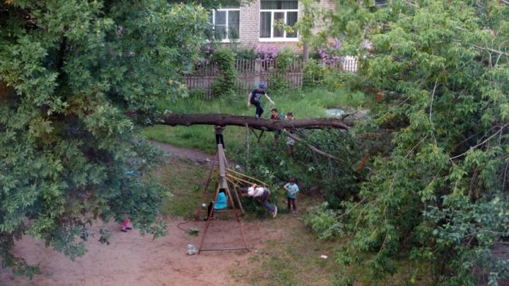Старое дерево рухнуло на детскую площадку в Ярославле