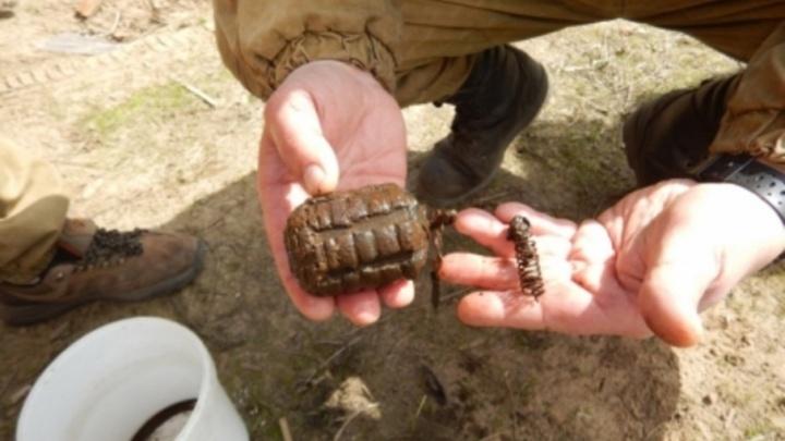 В своем огороде на Кегострове пенсионерка нашла японскую гранату 30-х годов прошлого века