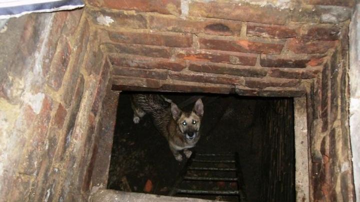 В Сызрани спасатели достали собаку из-под земли