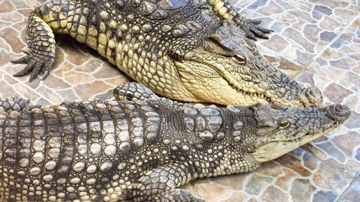 Жителей Самары просят выбрать лучшую пару городского зоопарка