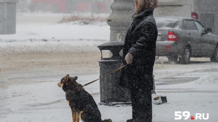 Будет ветрено: вместе с морозами в Пермь придут метели и снег