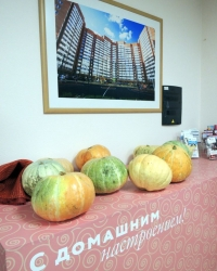 «Камская долина» собрала пермяков на празднике тыквы