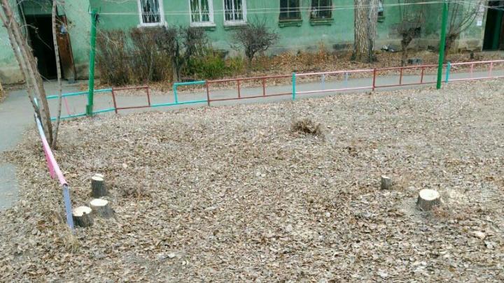 «Рубили всё подряд»: жителей Ленинского района возмутила зачистка двора от деревьев