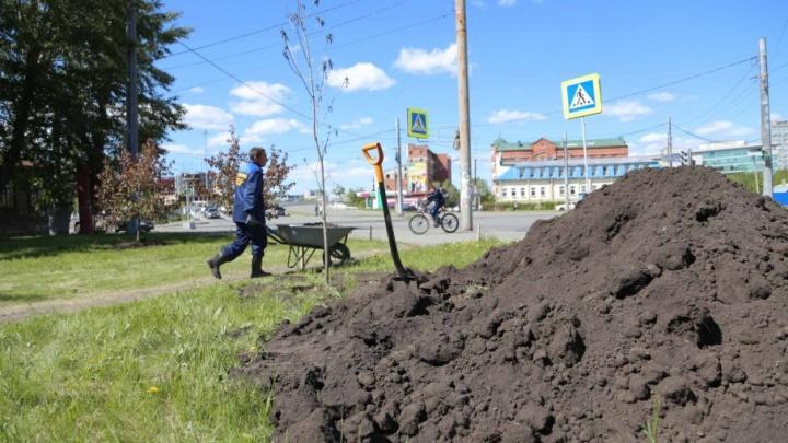 На смену тополям – боярышник: до зимы в Челябинске высадят полторы тысячи деревьев
