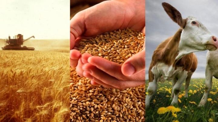 Более 100 аграриев региона получили кредиты в «Кубань Кредит»