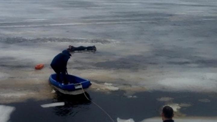 «Ещё вчера ходил этой тропой»: случайные свидетели спасли соломбальца из опасного льда на Кузнечихе