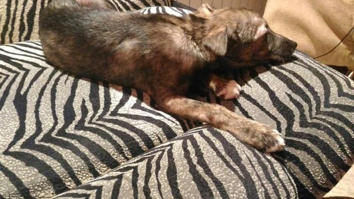 Ростовчанин спас собаку, которую живодеры хотели пустить на шашлык
