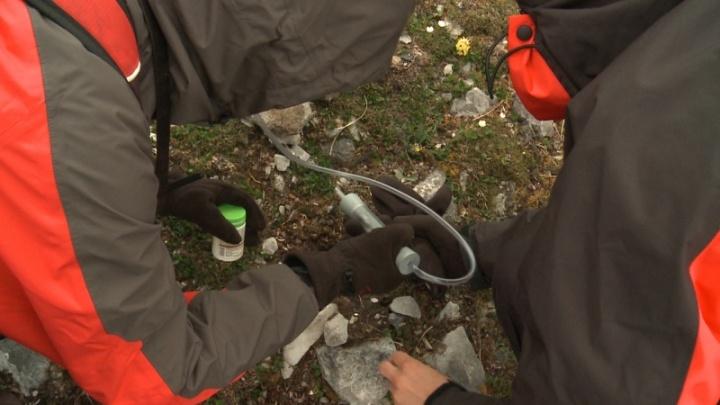 Архангельские ученые открыли неизвестную популяцию североамериканской жемчужницы