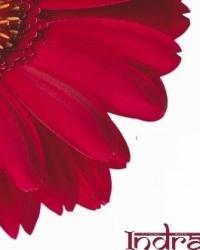 Купил цветы – помог детям