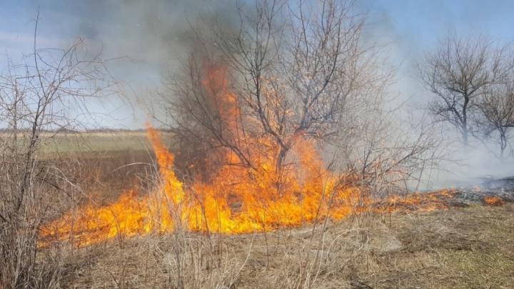 В Волгоградской области удвоили размер штрафа за шашлыки на природе