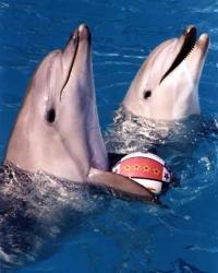 Конкурс рисунков «Дельфин и я» стартует в Тюмени