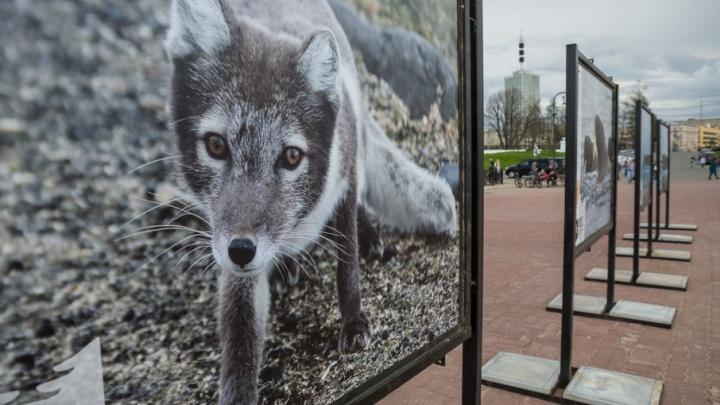 На Красной пристани под открытым небом открылась фотовыставка заповедной природы